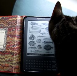 Kindle and kitty