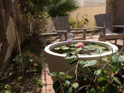 Liz Fenwick's Dubai Garden