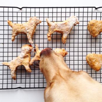 Doggy Treats from Raincoats & Retrievers by Cressida McLaughlin